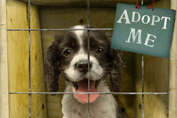 animal-rescue-facts1289330717-jul-3-2012-600x400